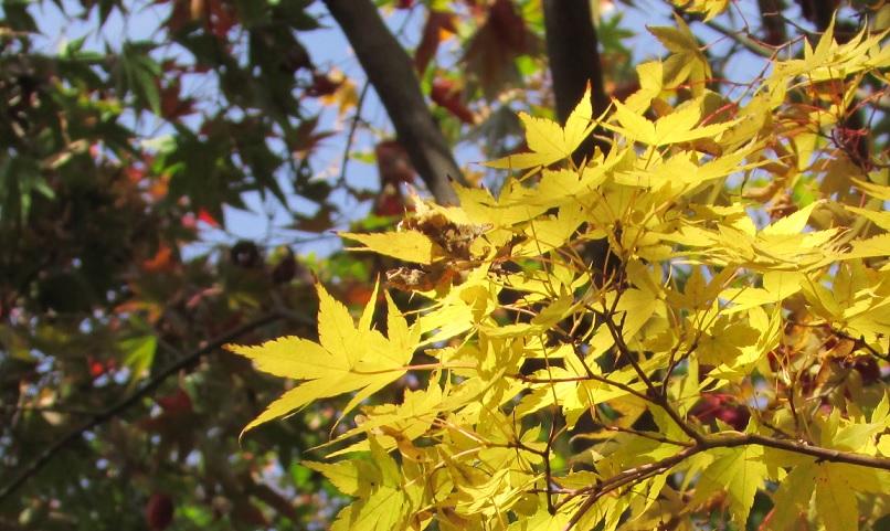 kobayashi-momizi151121-112.jpg