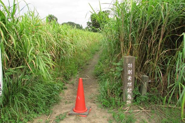 tazimagahara150923-105.jpg