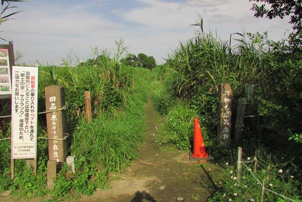 tazimagahara150923-114.jpg