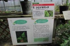 tukubashokubutu151103-102.jpg