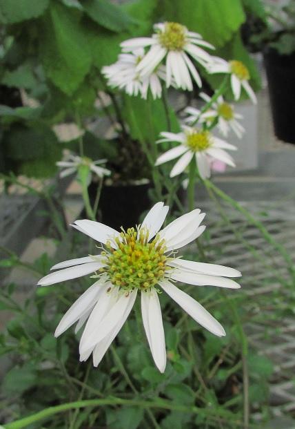 tukubashokubutu151103-135.jpg