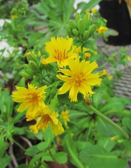 tukubashokubutu151103-137.jpg