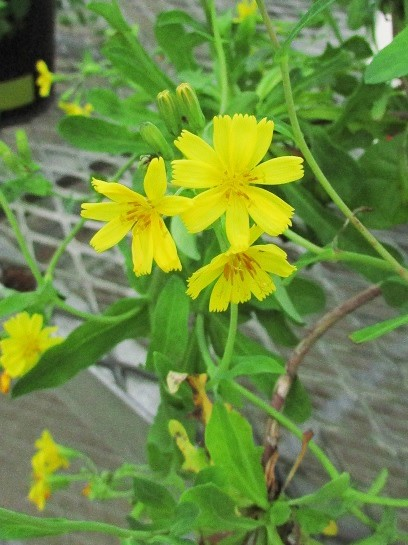 tukubashokubutu151103-138.jpg