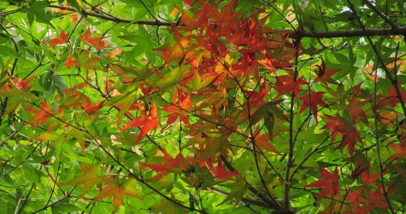 tukubashokubutu151103-146.jpg