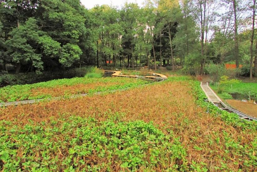 tukubashokubutu151103-147.jpg