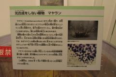 tukubashokubutu151103-150.jpg