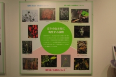tukubashokubutu151103-151.jpg