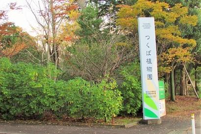 tukubashokubutu151103-158.jpg