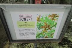 tukubashokubutu151103-159.jpg