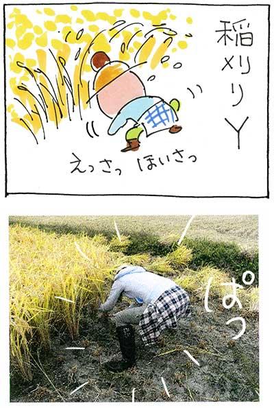 農業体験151030_01