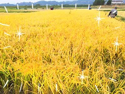 農業体験151030_03