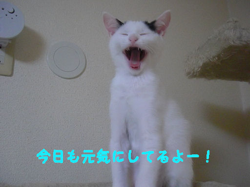 CIMG9605.jpg