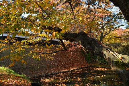 ブログ弘前公園2