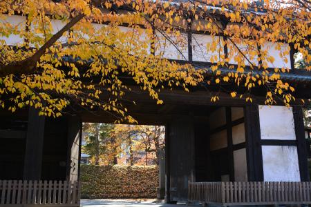 ブログ弘前公園6