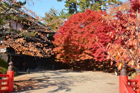 ブログ弘前公園7