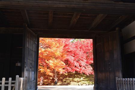 ブログ弘前公園8