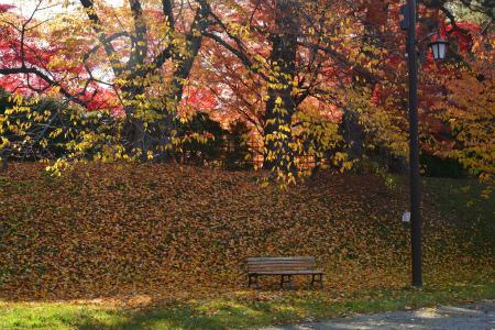 ブログ弘前公園9