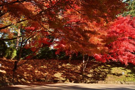 ブログ弘前公園13