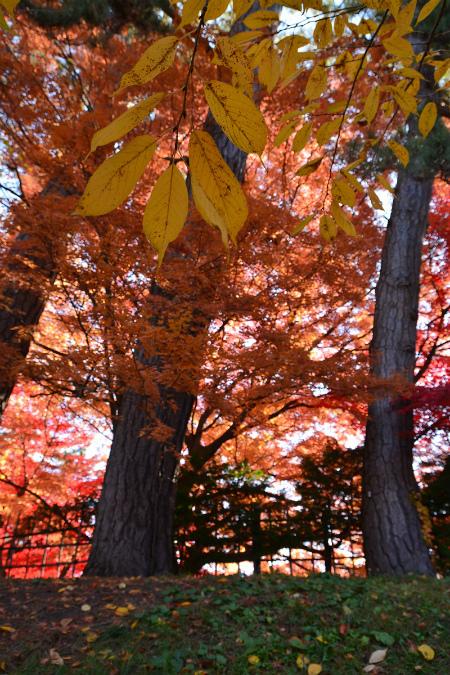 ブログ弘前公園12