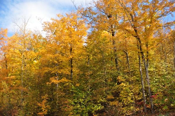 アルゴンキン州立公園DSC_0804