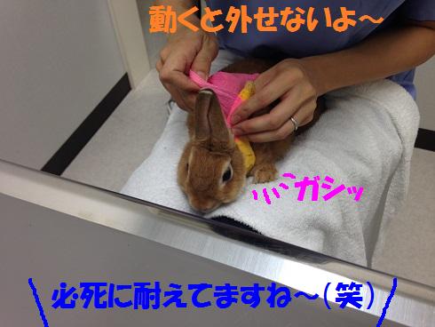 IMG_0409.抜糸