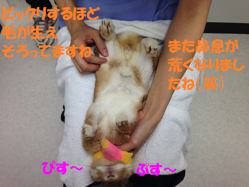 IMG_0407.抜糸