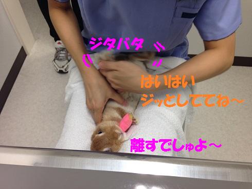 IMG_0406.抜糸