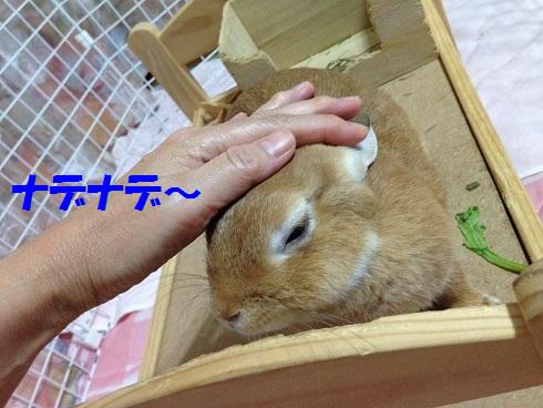 IMG_0457.ナデナデ