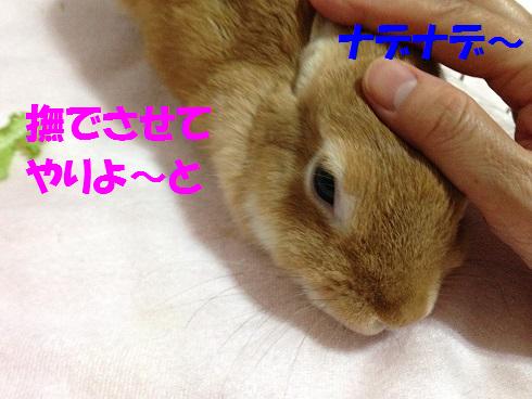IMG_0451.ナデナデ