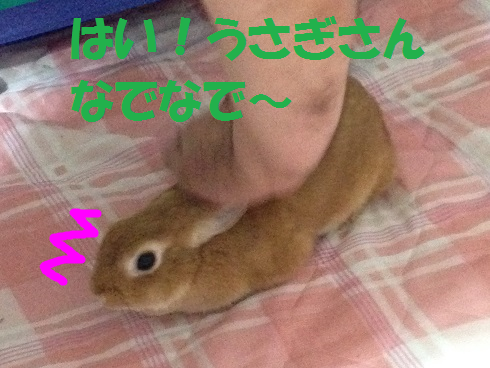 IMG_0430.ナデナデ