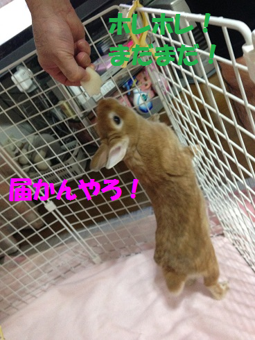 IMG_0578.梨
