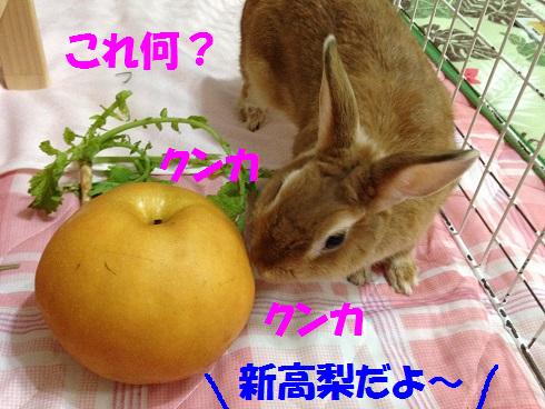 IMG_0569.梨