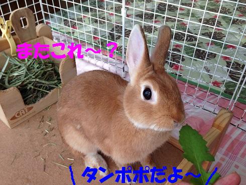IMG_0600.たんぽぽ