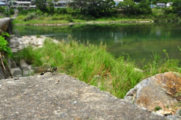 4片岡沈下橋15.09.14