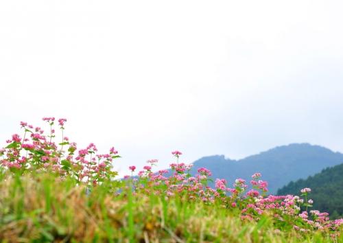 4井内アカソバ15.10.10