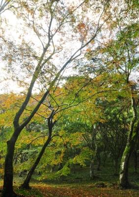 3稲荷山15.11.15
