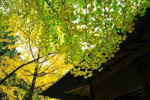 4三島神社15.11.09