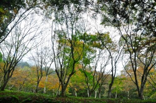 1稲荷山15.11.20