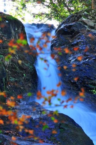 2白糸の滝15.11.20