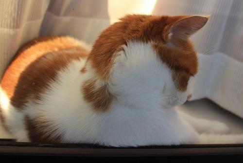 ブログNo.419(夕日と猫と影)2