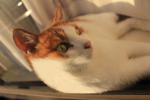 ブログNo.419(夕日と猫と影)3