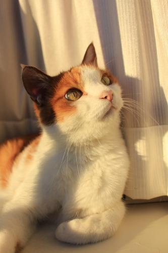 ブログNo.419(夕日と猫と影)6