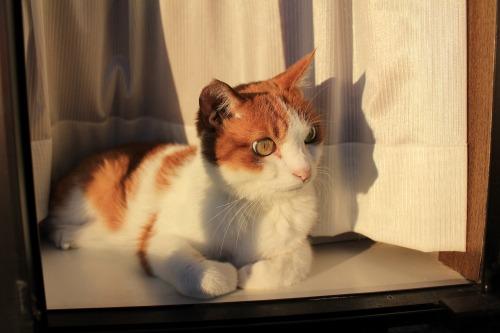 ブログNo.419(夕日と猫と影)7