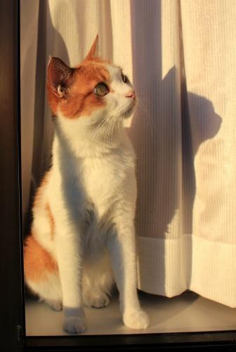 ブログNo.419(夕日と猫と影)8