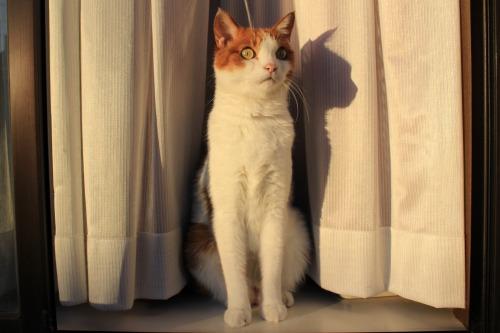 ブログNo.419(夕日と猫と影)10