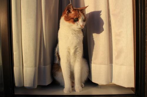 ブログNo.419(夕日と猫と影)11