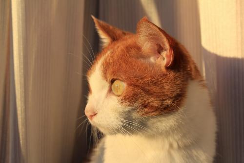 ブログNo.419(夕日と猫と影)14