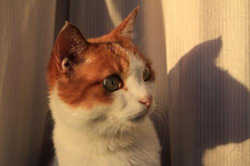 ブログNo.419(夕日と猫と影)15