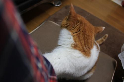 ブログNo.443(ダミーなのに?&困り猫)7