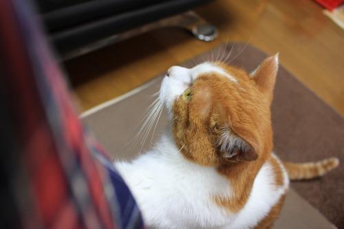ブログNo.443(ダミーなのに?&困り猫)8